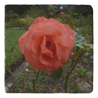 orange Rose Trivet