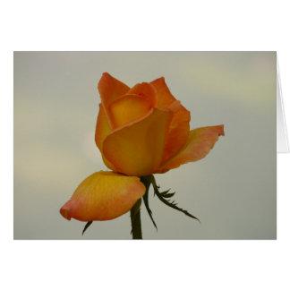 Orange Rosebud Note Card