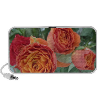 orange roses ddl travelling speakers