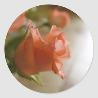 orange roses round sticker