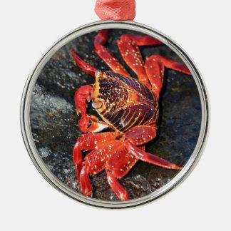 Orange sally lightfoot crab Galapagos Islands Metal Ornament