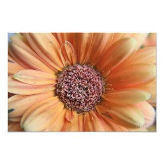 Orange Sherbet Daisy Photo Art