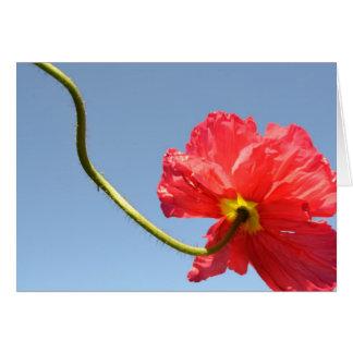 Orange Sky Poppy Card