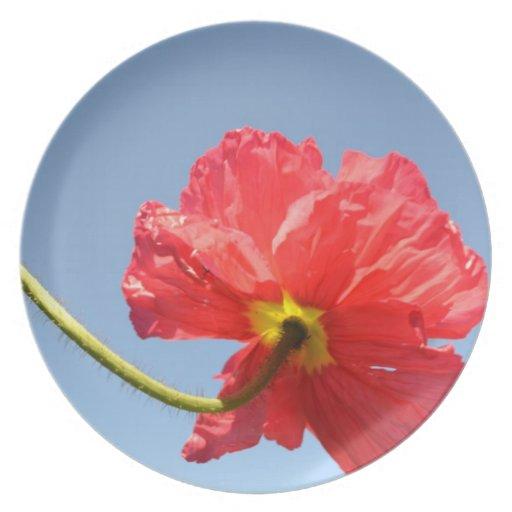 Orange Sky Poppy Plate