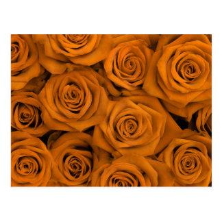 Orange Spectacular Roses Postcard