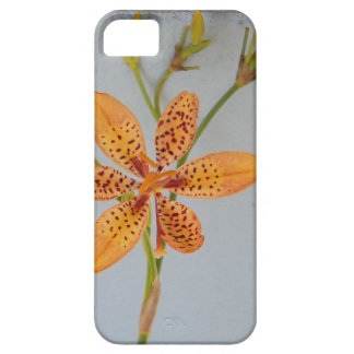 Orange spotted Iris called a  Blackberry lily Case For The iPhone 5