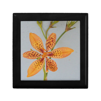 Orange spotted Iris called a  Blackberry lily Gift Box