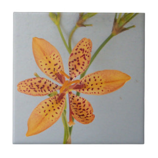 Orange spotted Iris called a  Blackberry lily Tile