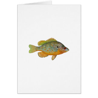 Orange Spotted Sunfish Card
