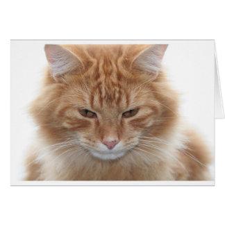 Orange Stripped Tabby Cat Card