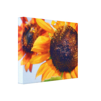Orange Sunflowers Canvas Print