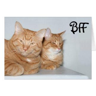 Orange tabbies BFF Card