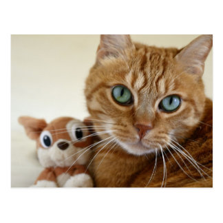 Orange Tabby Cat and His Best Friend Postcard