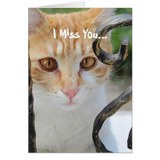 Orange Tabby cat Card