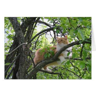 Orange Tabby Cat in Tree Card