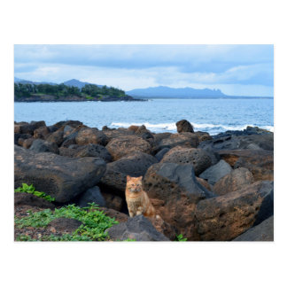 Orange Tabby Cat, Kauai, Hawaii Postcard