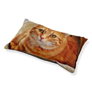 Orange Tabby Cat, Kitten, Kitty Cat Bed Pillow