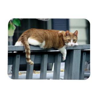 Orange Tabby Cat on Blue Railing Rectangular Photo Magnet