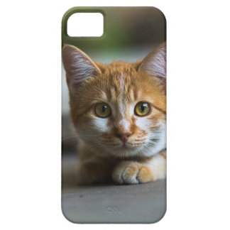 Orange tabby cat portrait. iPhone 5 covers
