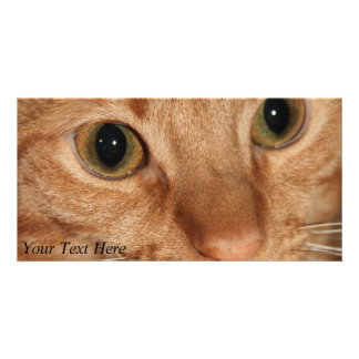 Orange Tabby Cat Profile Face Close up Personalized Photo Card