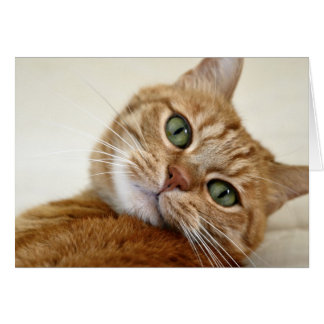 Orange Tabby Cat with Green Eyes Card