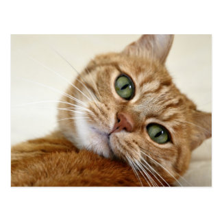 Orange Tabby Cat with Green Eyes Postcard