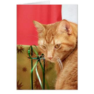 Orange tabby Christmas Card