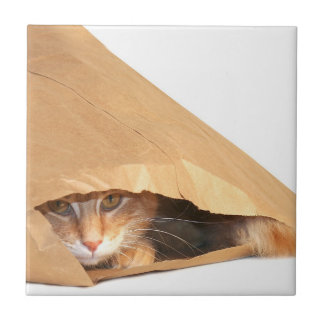 Orange tabby in bag ceramic tile