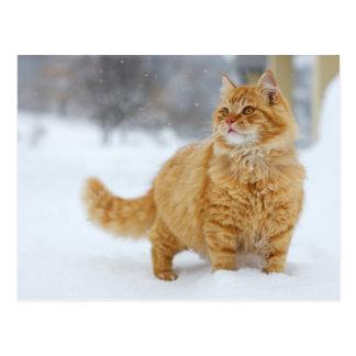 Orange Tabby in the snow Postcard