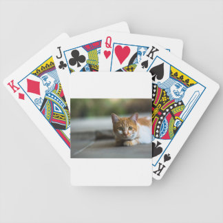Orange tabby kitten. bicycle playing cards