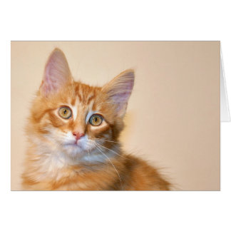 Orange tabby kitten card