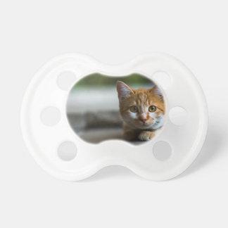 Orange tabby kitten. dummy