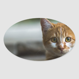 Orange tabby kitten. oval sticker