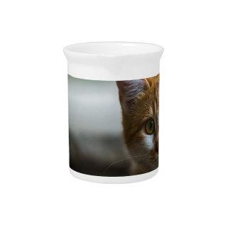 Orange tabby kitten. pitchers