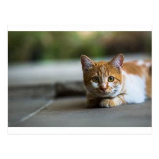 Orange tabby kitten. postcard