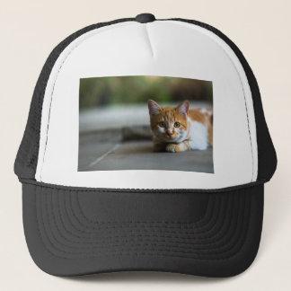 Orange tabby kitten. trucker hat