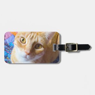 Orange tabby on quilt luggage tag
