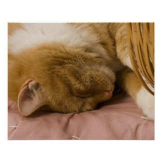 Orange tabby sleeping poster