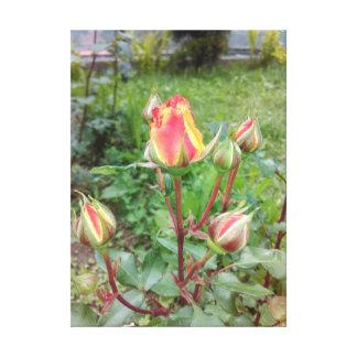 Orange Tea Roses Canvas Print