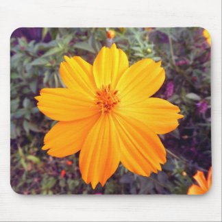 Orange Thai wildflower Mouse Pad