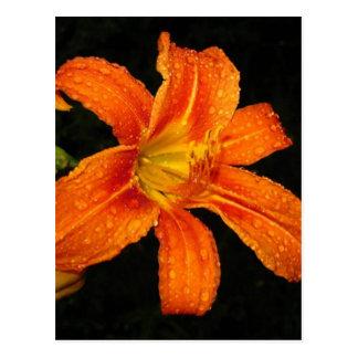 Orange Tiger Lily Flowers Postcard