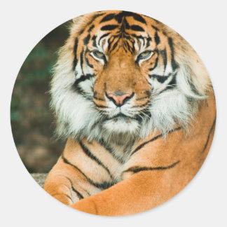 Orange Tiger Stickers