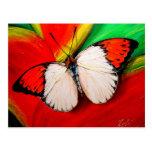 Orange Tip Butterfly Postcard