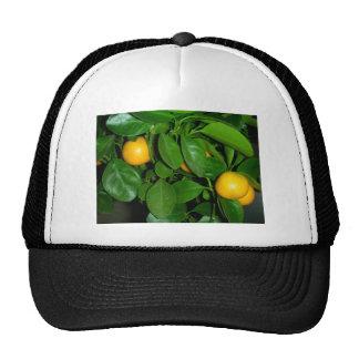 Orange tree trucker hats