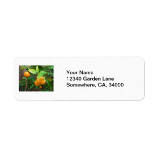 Orange Tree Return Address Label