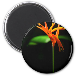Orange tropical flowers isolated against black bac 6 cm round magnet