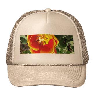 Orange Tulip Cap