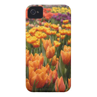Orange Tulip Case-Mate iPhone 4 Case