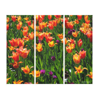 Orange Tulip Garden Canvas Print