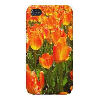 Orange Tulips Covers For iPhone 4